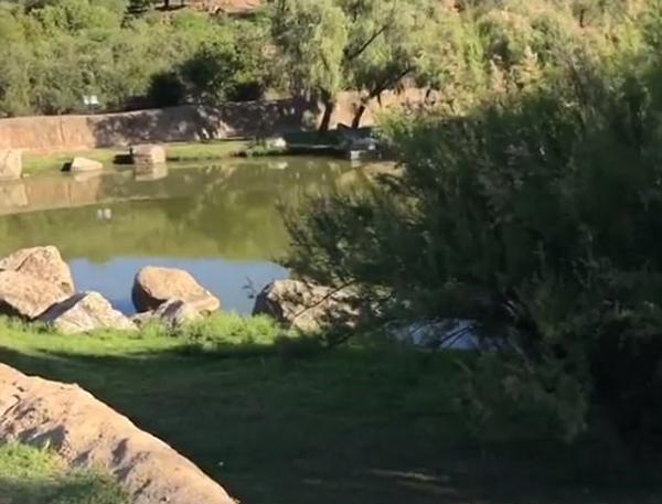 Bóng golf nép mình cạnh cá sấu khổng lồ